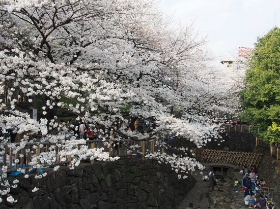 Taman Shinsui Otonashi