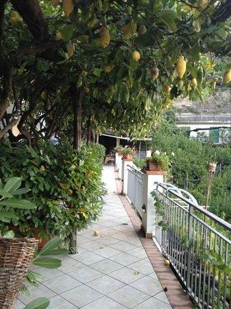 Agriturismo Villa Maria: Lemon x Lemon