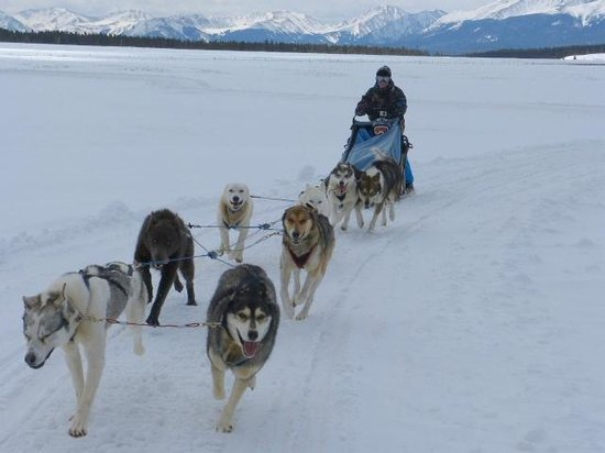 Alpine Adventures Dogsledding: Guests are allowed to mush