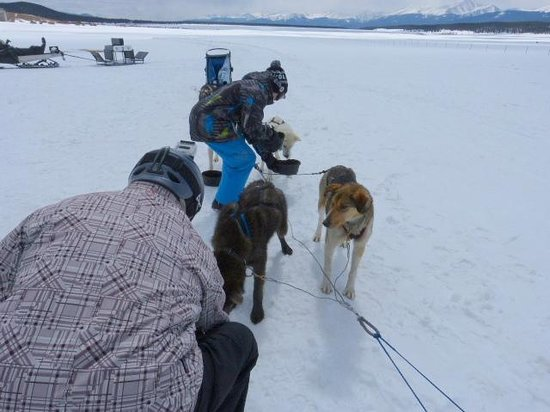 Alpine Adventures Dogsledding: Feeding the dogs a snack after their 5-mile run