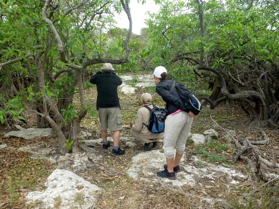 Melia Cayo Santa Maria: Bird watching with the best tour guide Edwin