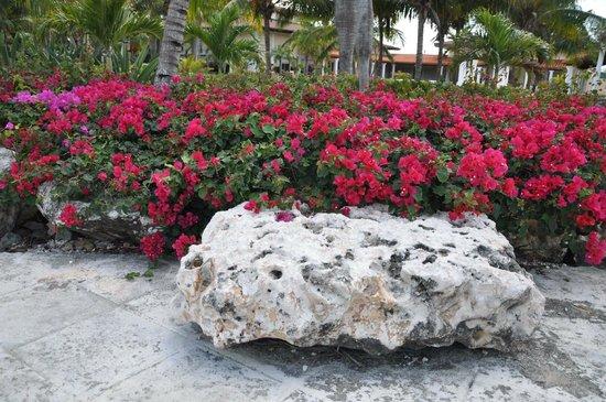 Melia Cayo Santa Maria: flowers