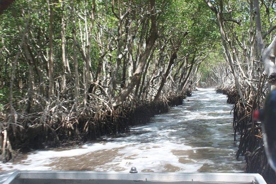 Everglades City Airboat Tours : Airboat Everglades trail