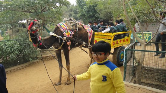Jhajjar, Indien: Camel Cart ride at Pratap Garh Farms