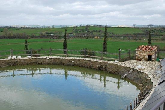 Agriturismo San Lorenzo: lago delle anatre