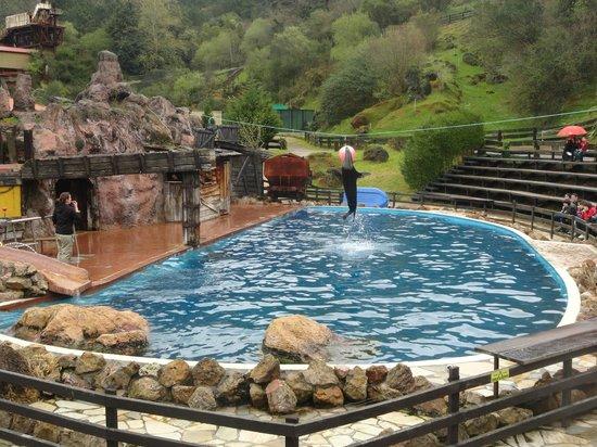 Lobos - Picture of Parque de la Naturaleza de Cabarceno, Obregon - TripAdvisor