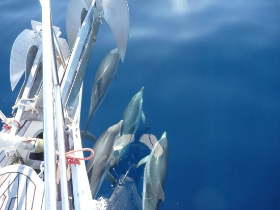 Ciudad de Naxos, Grecia: DOLPHINS IN THE FRONT OF S/Y ANNABELLA