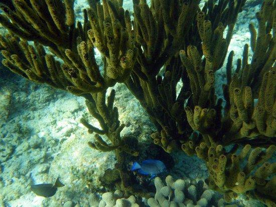 Half Moon Bay : great snorkeling