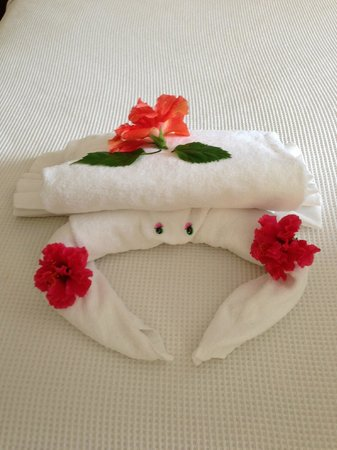 Allegro Cozumel: Towel crab