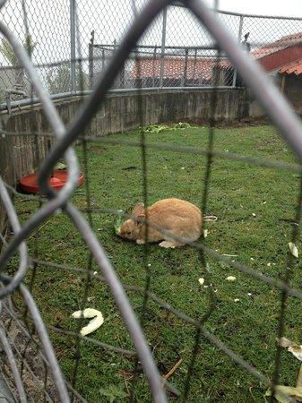 Restaurante El Rancho del Sapito: Otro conejo