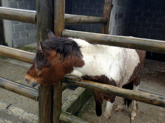 Restaurante El Rancho del Sapito: Pony