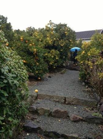 Bonne Femme: 蜜柑畑を登る