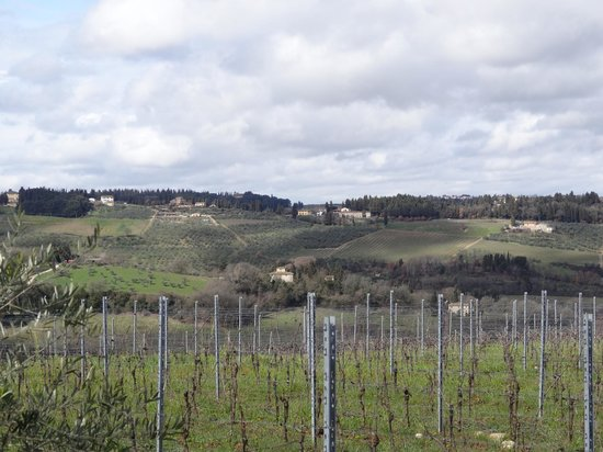 Tuscan Wine Tours By Grape Tours Tripadvisor