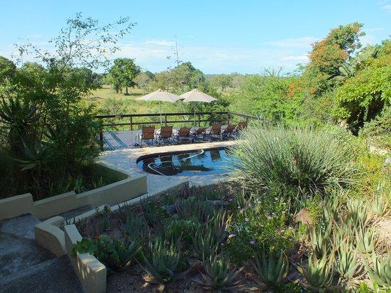 Elephant Plains Game Lodge: 2nd pool at Elephant Plains
