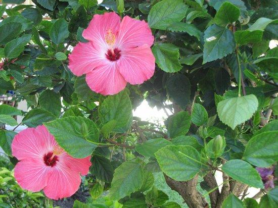 Sandals Royal Bahamian Spa Resort & Offshore Island : Belles fleurs partout sur le site