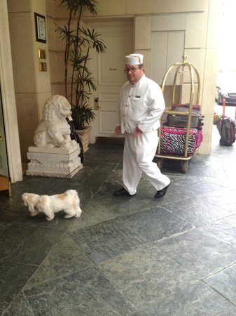 The Peninsula Beverly Hills: If you are too busy to walk your dog