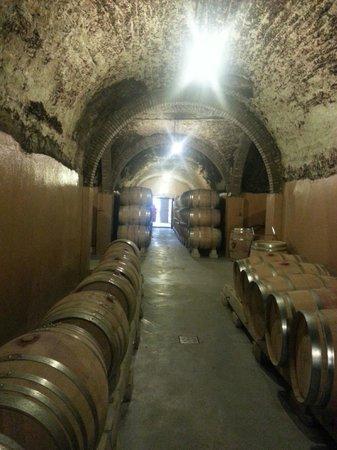 Bodegas Protos: Tunnels on wine tour