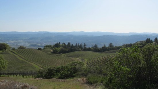 BobDog Winery: Panoramic view from the top of the vineyard