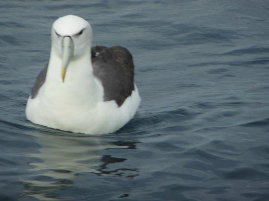 Henga Lodge : Albatross viewing boatside.