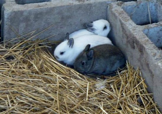 Clearview Horse Farm B&B: New baby bunnies.