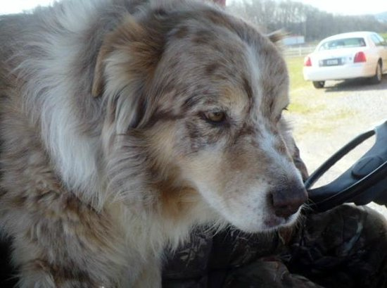 """Clearview Horse Farm B&B: Buck, he was actually """"talking"""" to me.  What a precious dog."""