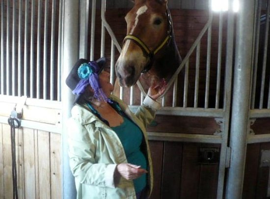 Clearview Horse Farm B&B: Getting to love one of the Gentle Giants, Belgian Horses