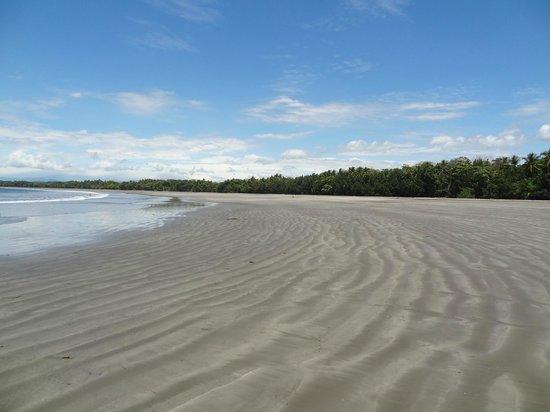El Morro Negro, Panama: Playa inmensa solo para nosotros...