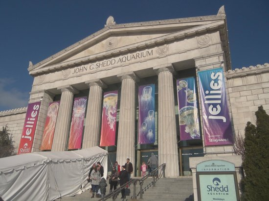 Dec 06, · You definitely shouldn't miss this National Historic Landmark. Located on the shores of Lake Michigan, Shedd Aquarium is placed on the Museum Campus Chicago, which it shares with the Adler Planetarium and the Field Museum of Natural History/K Yelp reviews.