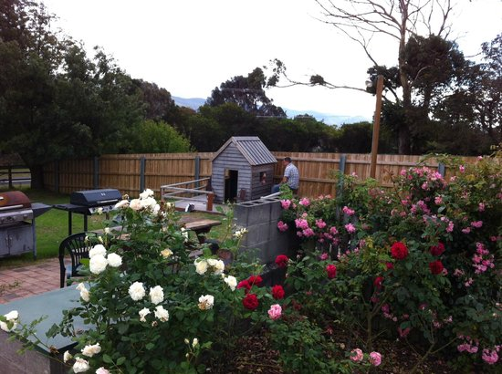 Wintersun Gardens Motel : Roses and the cute cubby