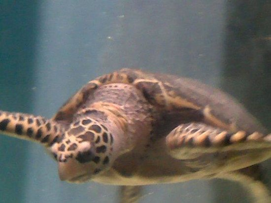 National Mexican Turtle Center : Tortuga