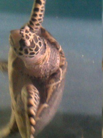 National Mexican Turtle Center: Tortuga