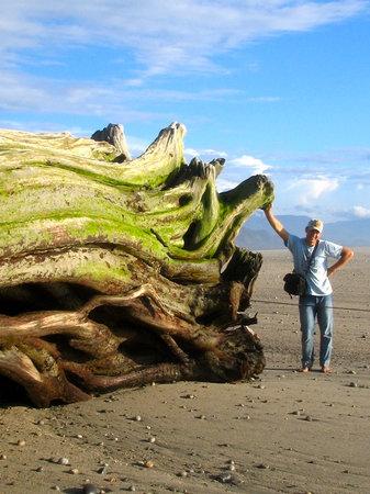 Karamea Farm Baches : Giant Driftwood on Karamea Beach