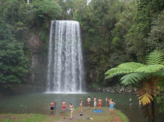 Uncle Brian's Tours: Milaa Milaa Waterfall