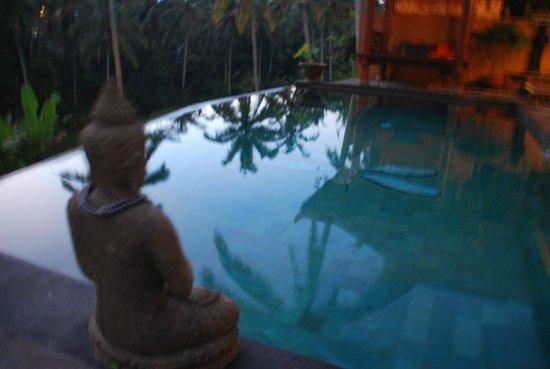 Capung Sakti Villas: Pool