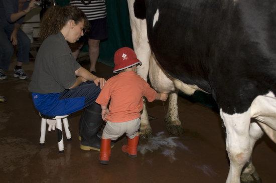 Eagle Acres Dairy