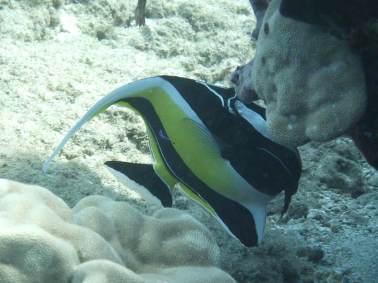 Patrick's Diving Adventures: Horeshoe Reef