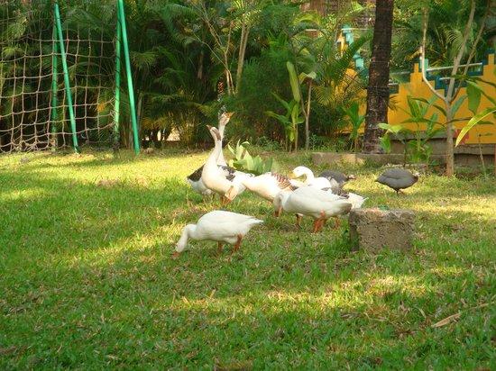 Parampara Resort & Spa, Coorg: LOVELY BIRDS