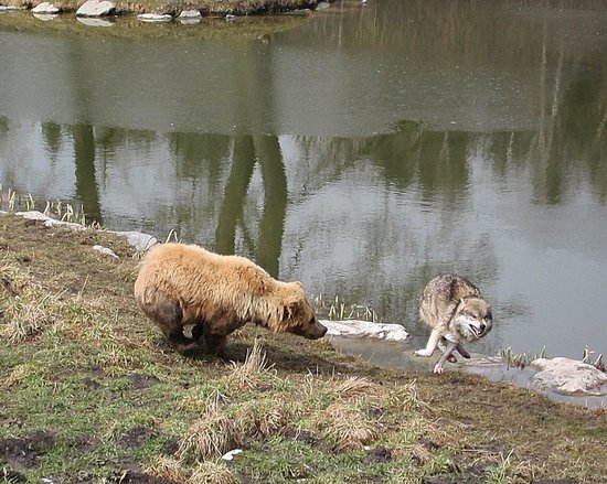 Wildpark Poing: Brown Bear and Wolf