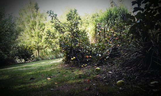 Radio Springs Hotel: Find the organic apples in the garden!