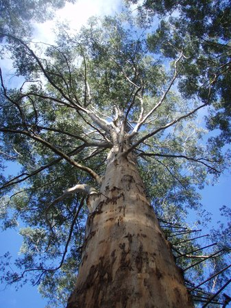 Rainbow Trail Chalets: Magestic Gloucester Tree