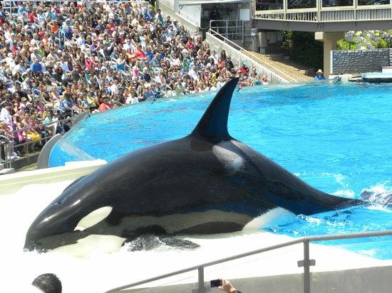 SeaWorld Сан-Диего: orca