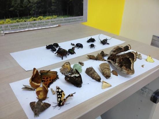 EcoMuseo CEA Val Sarmento: insetti
