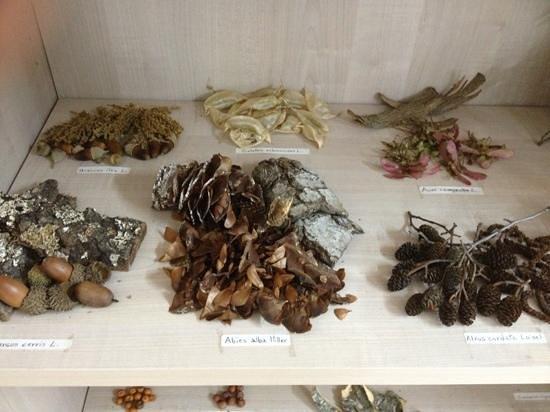 EcoMuseo CEA Val Sarmento: bacche e semi