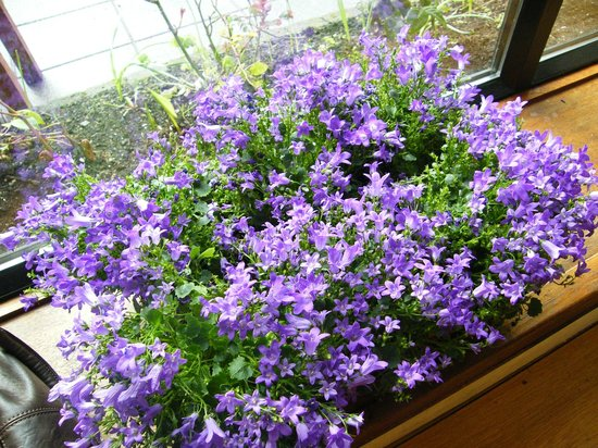 The Castlecourt Hotel: little spring flowerpot beside the table, while outside almost winter