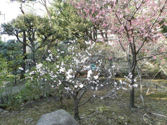 Tonogayato Garden: 殿ヶ谷戸庭公園その1