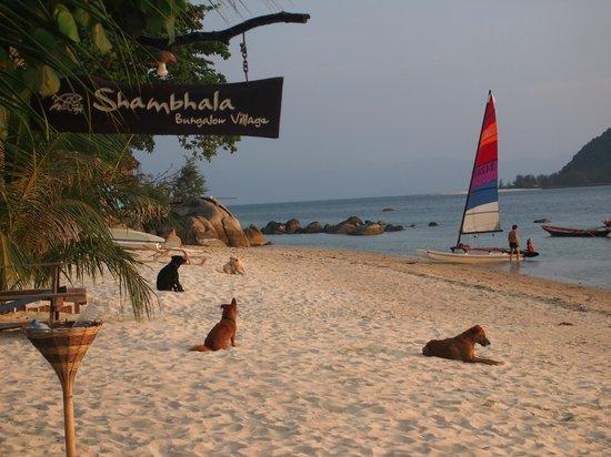 Shambhala Bungalow Village: beach
