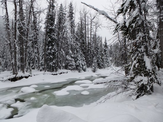 Manning Park Resort: On the snowshoe trail