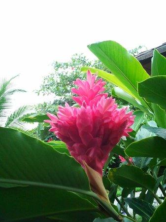 أرينال مونتشياري هوتل: Fleur exotique