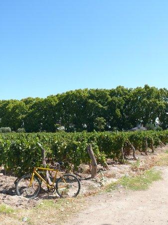 Bikes and Wines Wine Tour