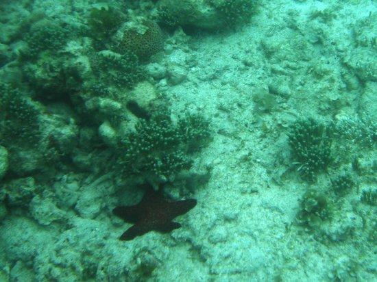 Amarela Resort: Marine life as seen from kayak